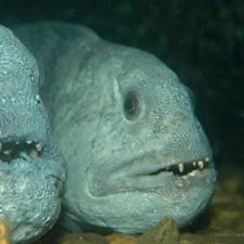 ROV - film under vann